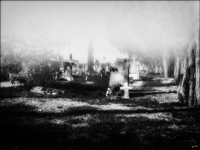 Angoissante brume... / Distressing mist...
