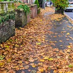 Fylde Road Autumn at Preston