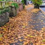 Fylde Road Autumn at Preston