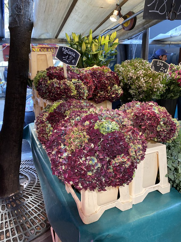 Hydrangeas at the market