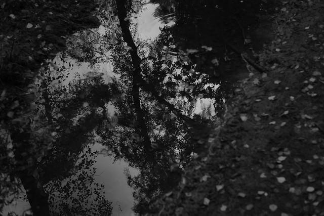 Pfützenspiegelung