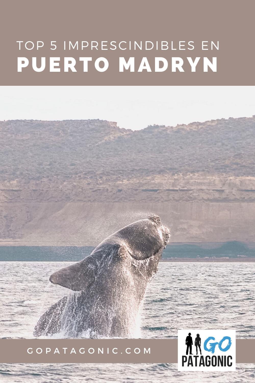 Qué ver en Puerto Madryn, top 5 imprescindibles
