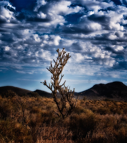 arizona chollacactus cindyslater cloads desert kingmanarizona landscape montains sky sunrise weather nbankstreetcallealamo az usa