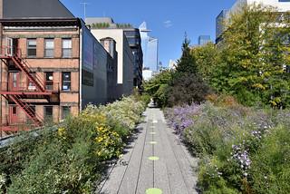 Autumn Meadow on the High Line