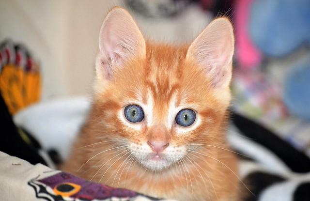 Spritz, newly adopted - Spritz, recién adoptado 💞