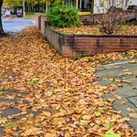 Autumn leaves in the street