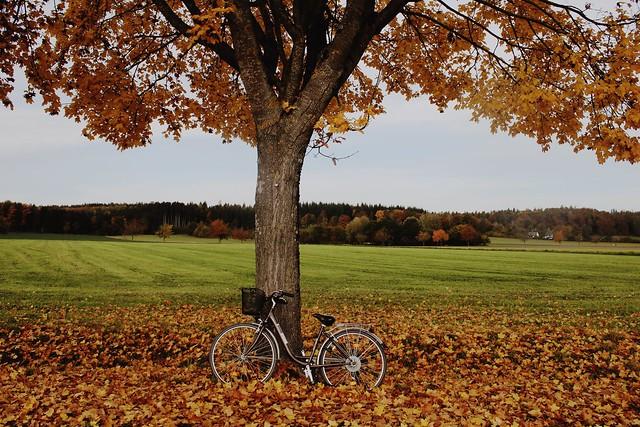 Those autumn days