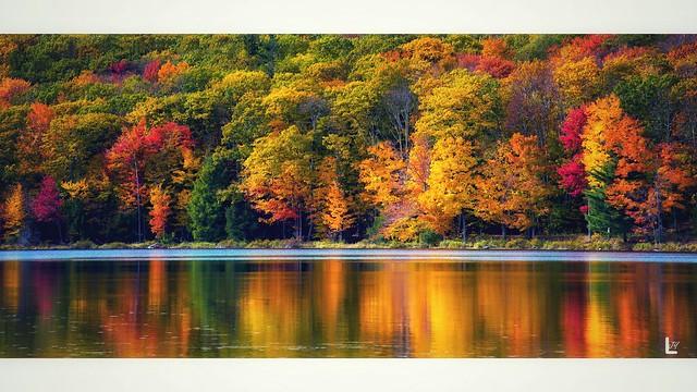 Fall colors。
