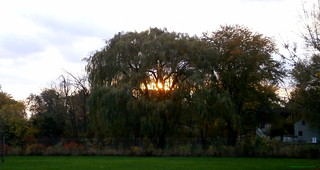 Light Through the Willow | by cordeliasmom2012