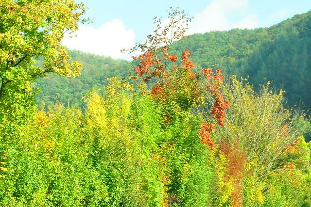 Goldener Oktober 2020 ... farbenfroher Odenwald ... bunte Blätter ... Brigitte Stolle