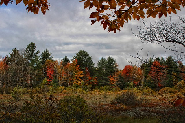 Wetland in Autumn, Upper Manistee Headwaters  Reserve, Michigan