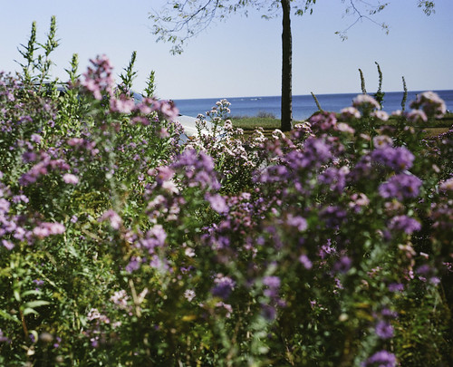 Bradford Beach Purple