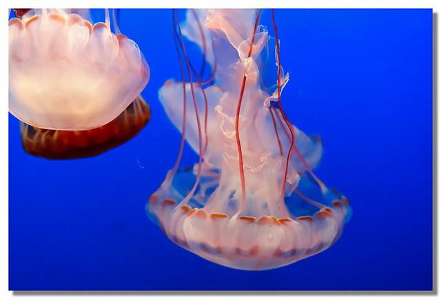 Oceanic Mushrooms