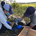 USDA Wildlife Services supports recovery of the state-endangered Delmarva fox squirrel