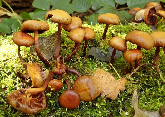 Fungi 2020 - 40