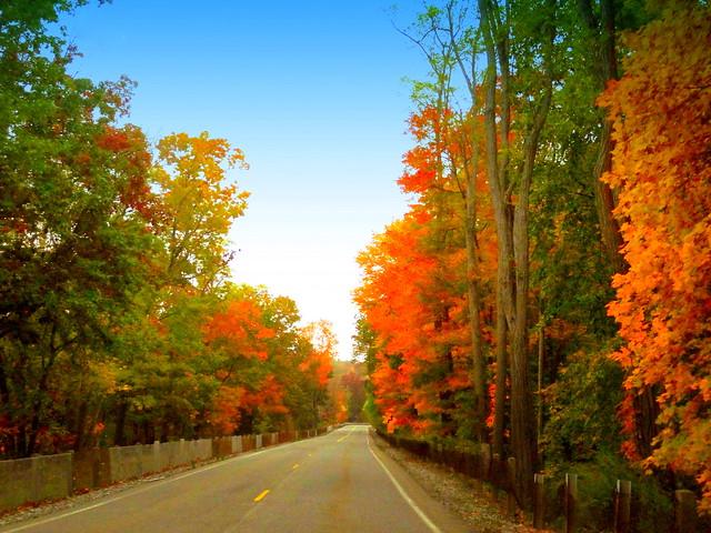 Autumnal Colors Transitonn