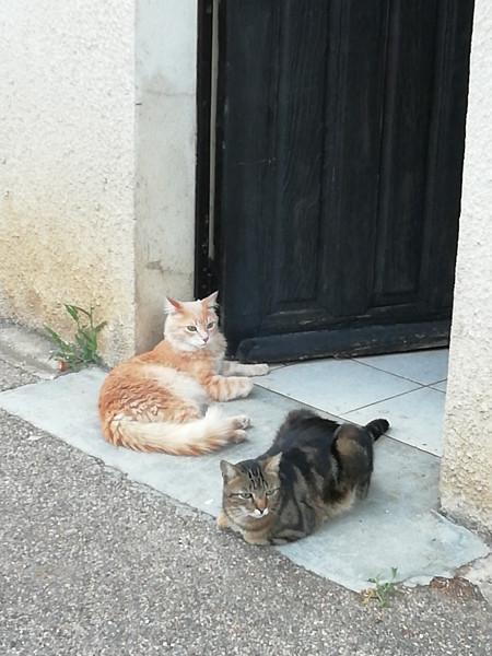 les deux chats de Catherine