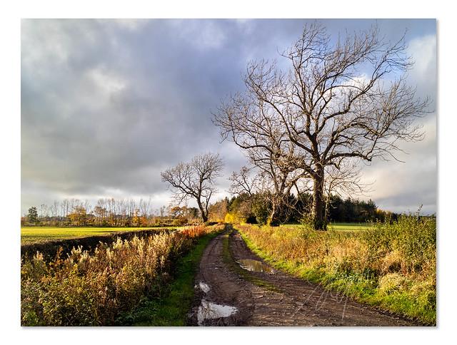 Farm Track - Autumn - M3