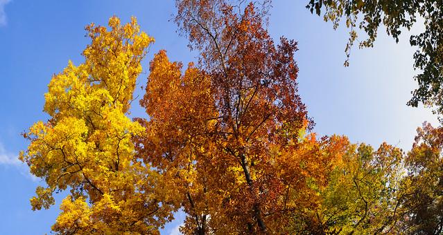 Very Large Fall Foliage Pano (100MP)