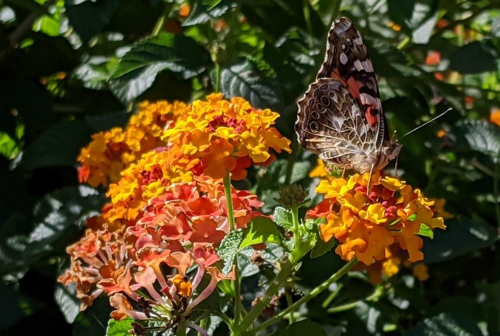 Garden Photos 10/26/20