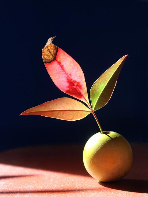 Nandina Leaves