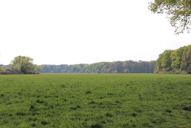 Natur, Frankfurt-Schwannheim 2020