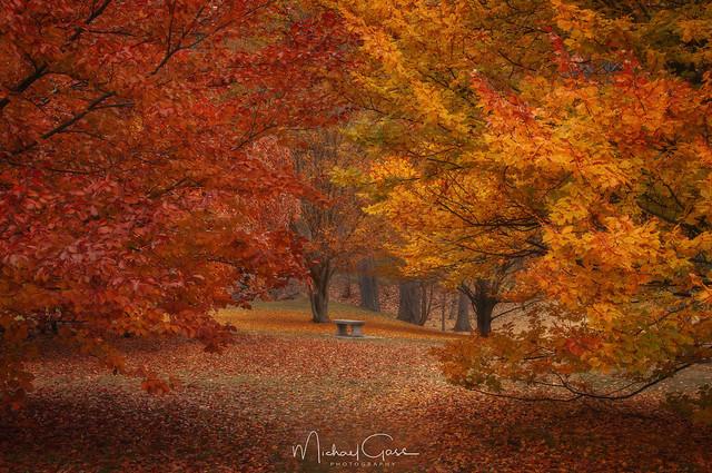 Finch Arboretum Autumn Colors II
