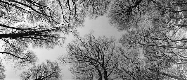 Treescape IV
