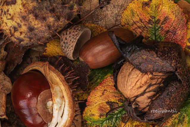 Herfst / Autumn (3)