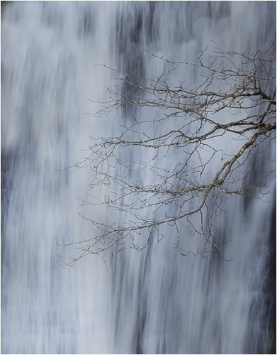 small waterfall tree  2 8036 (philip hayman)