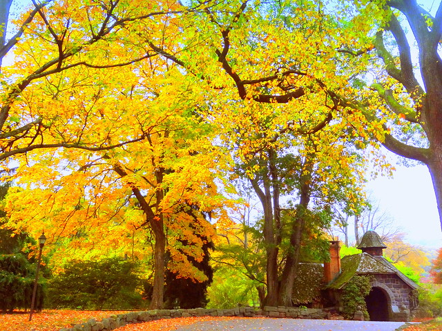 Autumn One Way