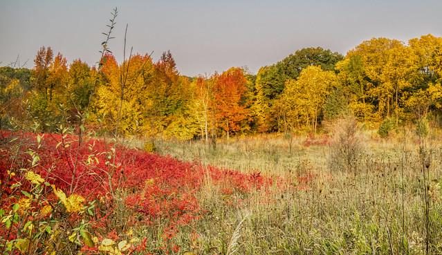 Pokagon State Park (3)