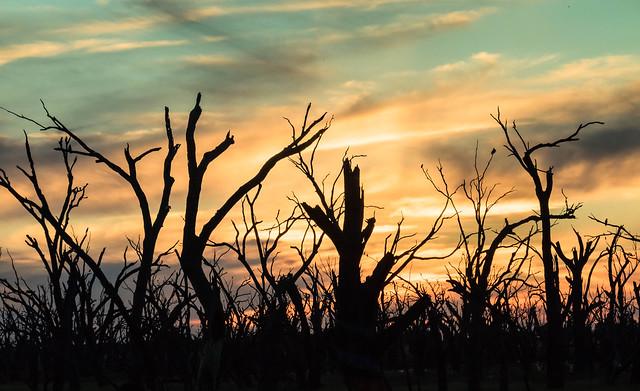 Sunset Winton Wetlands Victoria