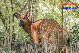 Bongo Pattern | by Scott Thomas Photography