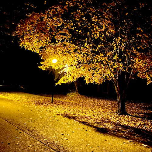 leaves streetlamp yellow monochrome backlighting flickredit squareformat stroll walk morning lighting tree path onecolor iphone11promax