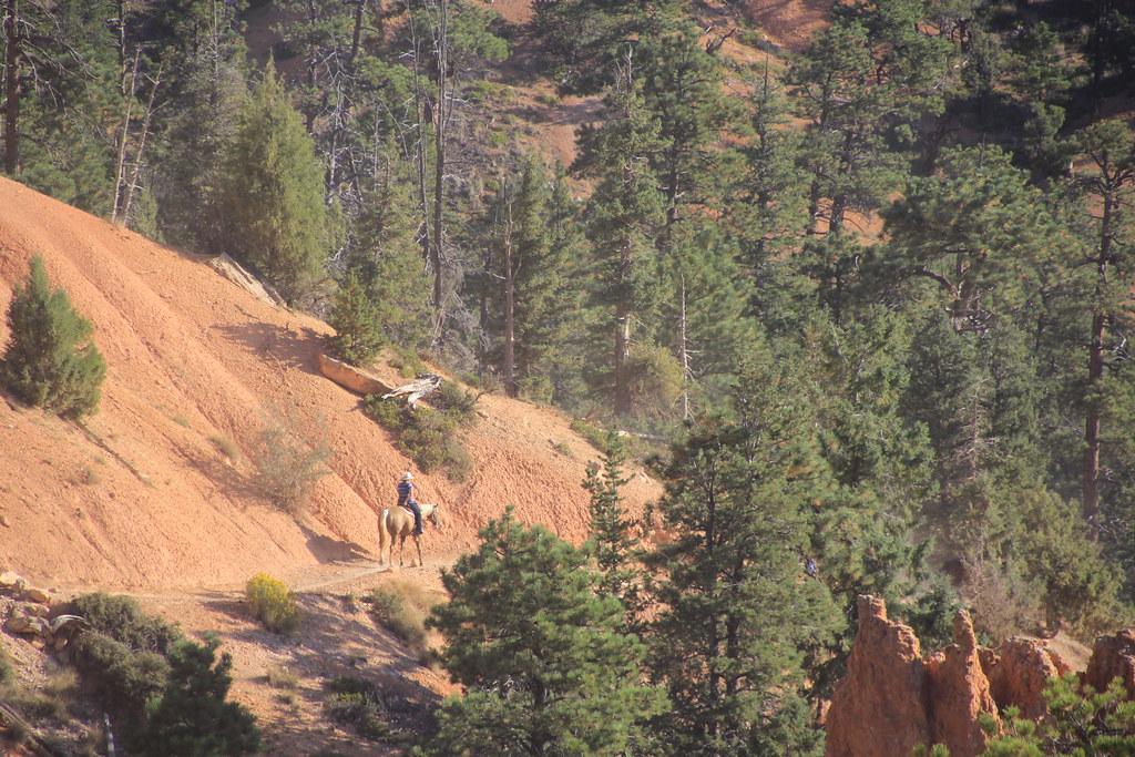 Wild Track, Bryce Canyon, Utah, USA.