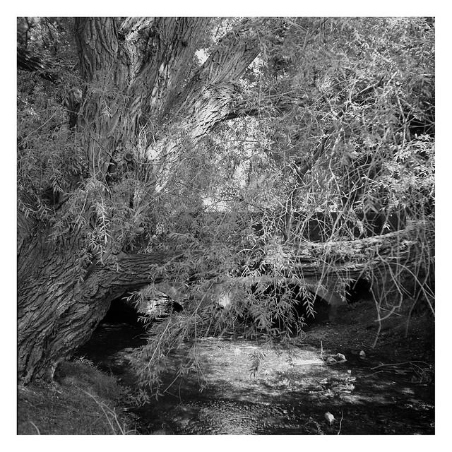 FILM - little stream