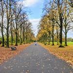 Haslam Park Autumn