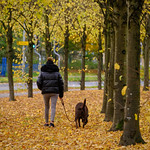Autumn dog walk