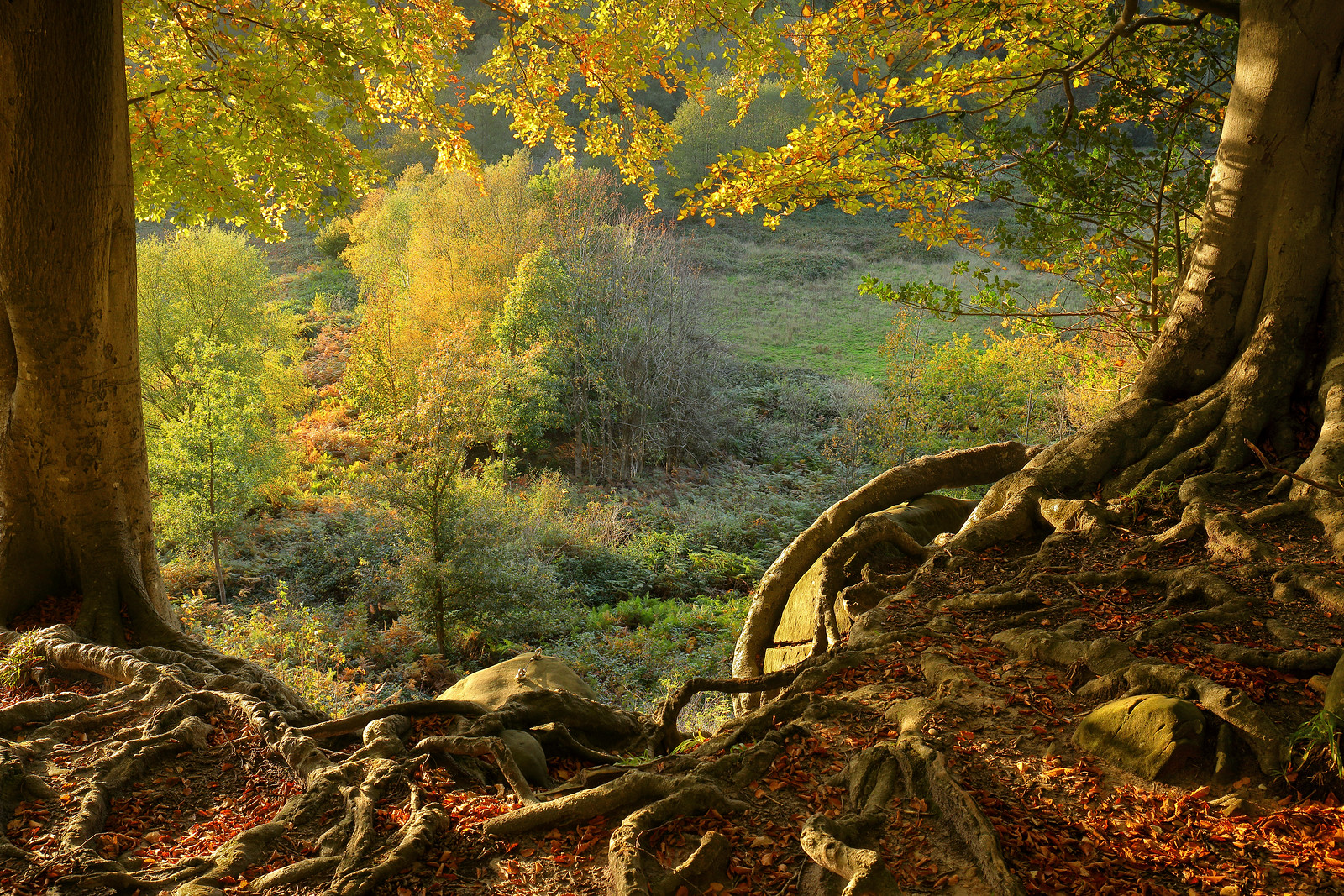 Autumn Woodland - 22nd October 2020