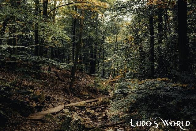 Mystic Autumn forest (04)