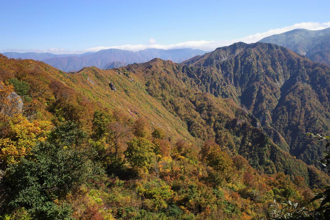 【新潟】金城山登山 稜線の紅葉風景