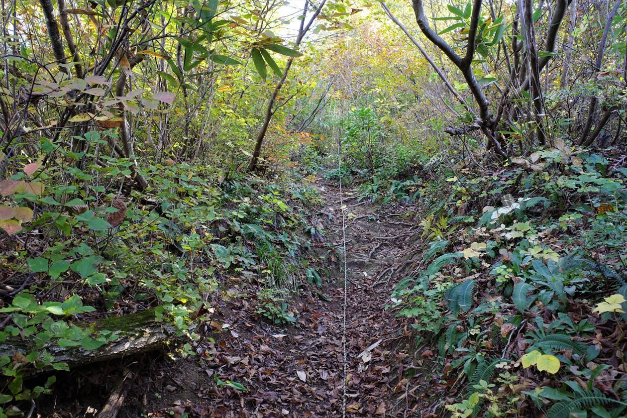 金城山・観音山コースのロープ