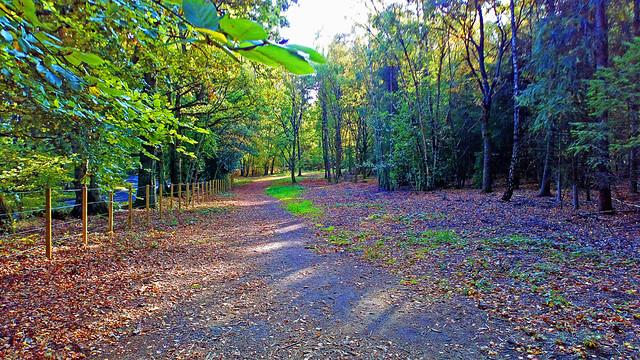D25195.  Hartland Country Park.