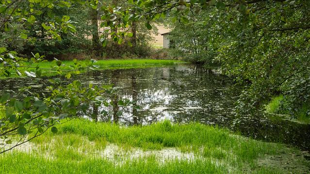 Der Teich am Waldrand