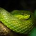 "<p><a href=""https://www.flickr.com/people/rjtrixster/"">R.J.Boyd</a> posted a photo:</p>  <p><a href=""https://www.flickr.com/photos/rjtrixster/50519987031/"" title=""Snake 20-10-20""><img src=""https://live.staticflickr.com/65535/50519987031_e720ba0afa_m.jpg"" width=""240"" height=""160"" alt=""Snake 20-10-20"" /></a></p>"
