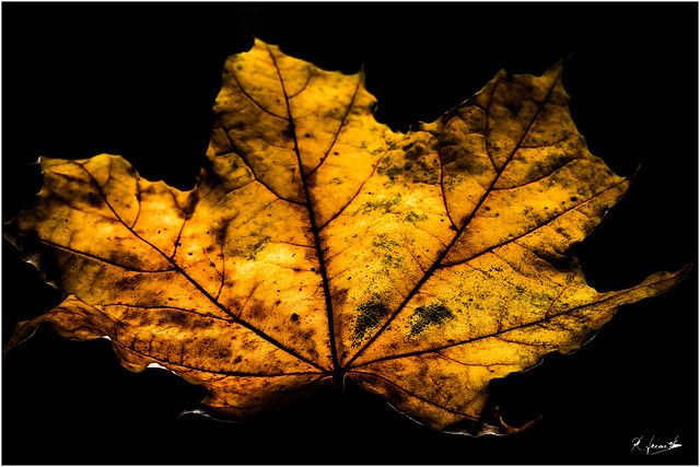 Herbstblat