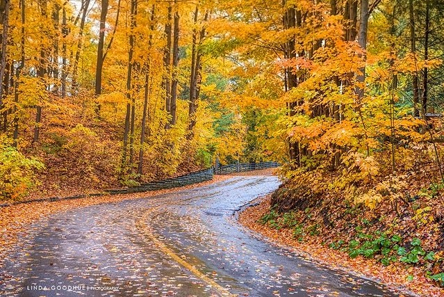The fall winding road...