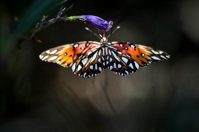 Beautiful Underwings