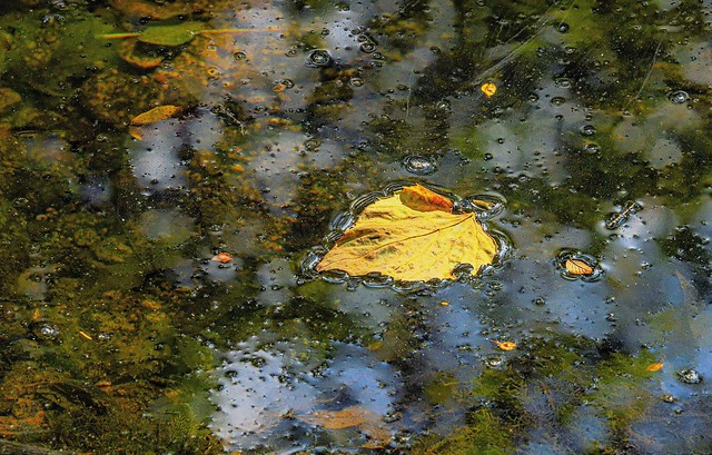 IMG_0070 #leaf-in-water